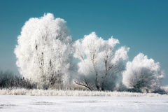 Three Snowy Trees. On a cold winter day stock image