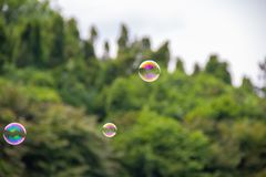 Three soap bubbles fly over the park stock images