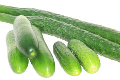 Three sorts of cucumber Royalty Free Stock Photography