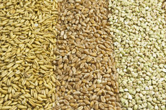 Three sorts of grain Stock Photo