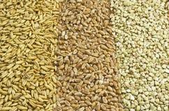 Three sorts of grain. In rows Stock Photo