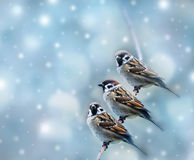 Three sparrows Stock Images