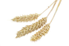 Three spikelets of wheat on a light background Royalty Free Stock Photos