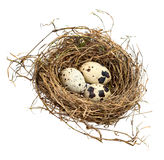 Three spotted eggs in a hay nest Stock Images