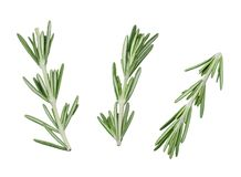 Three sprigs of fresh green rosemary on a white background. Isolated. Close-up. royalty free stock photo
