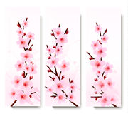 Three spring banners with blossoming sakura branch Royalty Free Stock Image