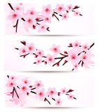 Three spring banners with blossoming sakura branch Royalty Free Stock Photos