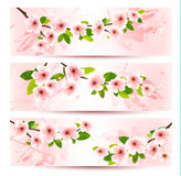 Three spring banners with blossoming sakura brunch. With spring flowers. Vector illustration Royalty Free Stock Photos