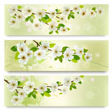Three spring banners with blossoming tree brunch Royalty Free Stock Photo