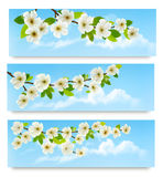 Three spring banners with blossoming tree brunch. With spring flowers. Vector illustration Stock Photos