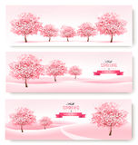 Three spring banners with pink cherry blossom trees. Stock Images
