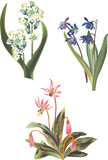 Three spring flowers illustration Royalty Free Stock Images