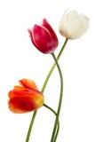 Three spring flowers Royalty Free Stock Photos