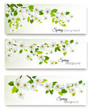 Three spring nature banners with blossom of cherry Royalty Free Stock Photo
