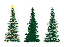Three spruce trees Stock Images