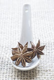 Three star anise on a spoon Stock Images