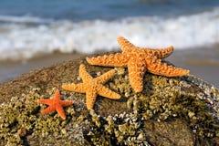 Three starfish stock photo
