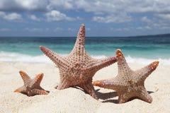Three starfish on beach Royalty Free Stock Photo