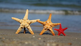 Three starfish on the beach stock footage