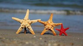 Three starfish on the beach. In summer stock footage