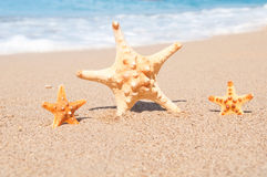 Three starfish on the beach. Time to go to the resort. Stock Images