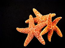 Three Starfish on Black Stock Photos