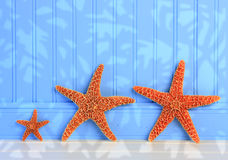 Three Starfish On Blue Background. Three Starfish On Blue Panel Background Royalty Free Stock Photos
