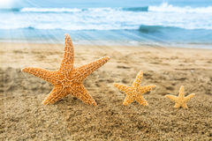 Three starfish overlooking ocean Stock Photography