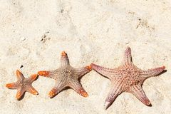 Three starfish on beach Royalty Free Stock Photos
