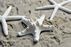 Three starfish on a sandy beach Stock Image