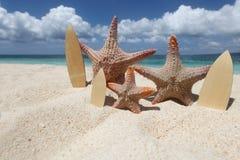 Three starfish surfers on beach Royalty Free Stock Photo
