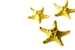 Three starfish on a white background. royalty free stock photo