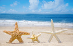 Three Starfishes on a beach. Three Starfishes on a sandy beach by the ocean Stock Image