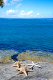 Three starfishes next to sea Royalty Free Stock Images