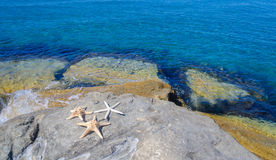Three starfishes next to sea Stock Images