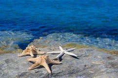 Three starfishes next to sea Stock Photography