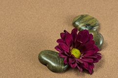 Three Stones with Gerber. On Brown Sand Royalty Free Stock Images