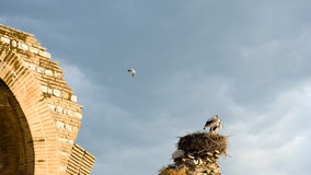 Three Storks and Ruins in Morning Sunlight Stock Photo