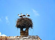 Three storks are standing on the nest Royalty Free Stock Photos