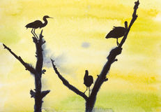 Three storks on a tree Royalty Free Stock Image