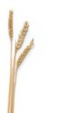 Three strands of wheat Royalty Free Stock Photos