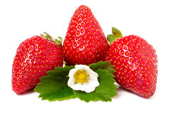 Three strawberries with flower and leaves isolated on white background Stock Images