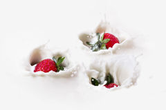 Three strawberries splashes in to milk. Royalty Free Stock Photography