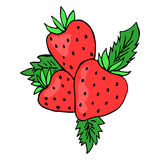 Three strawberry colored. Sketch. Vector isolated image. Stock Photo