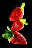 Three Strawberry macro. Three red juicy strawberry macro Royalty Free Stock Photography
