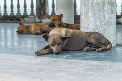 Three stray dog resting Royalty Free Stock Photos