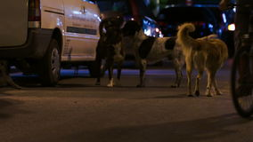 Three stray dogs in the street at night. Three tramp dogs in the night city street, biker riding nearby stock footage