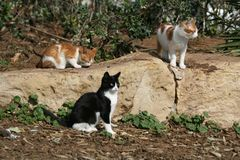 Three stray kittens on a seaside park stock photography