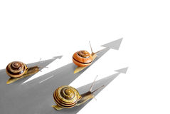 Three striped snail. Royalty Free Stock Image