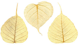Three structured autumn leaves. Macro. Royalty Free Stock Images